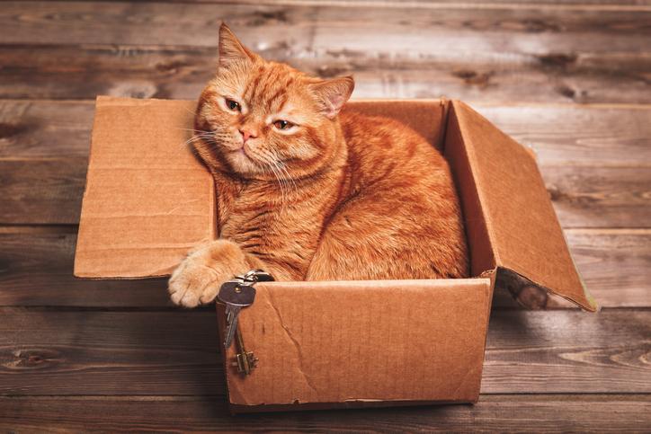 Költözés macskával? Megfelelő albérletet találni nem könnyű, de még nehezebb, ha kisállatokkal vágsz neki új állatbarát otthonod keresésének.